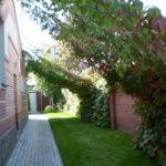 Создание тенистых участков сада с помощью плетистых и вьющихся растений